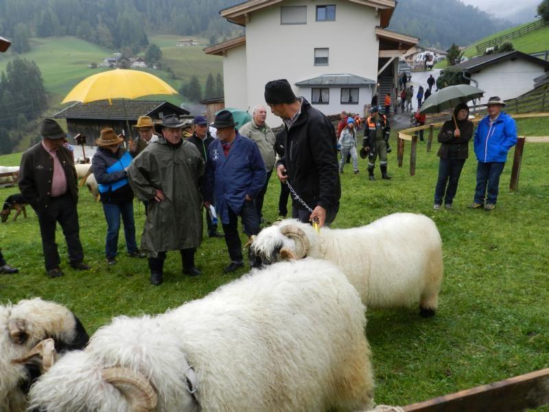 Juroren aus der Schweiz mit Riedl Leo