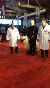 80 Jahre Jubiläum des Tiroler Schafzuchtverbandes