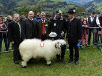 Österreichweite Walliser Schwarznasenausstellung am Sonntag, den 27. September in Rauris