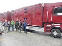 Schafexport nach Irland